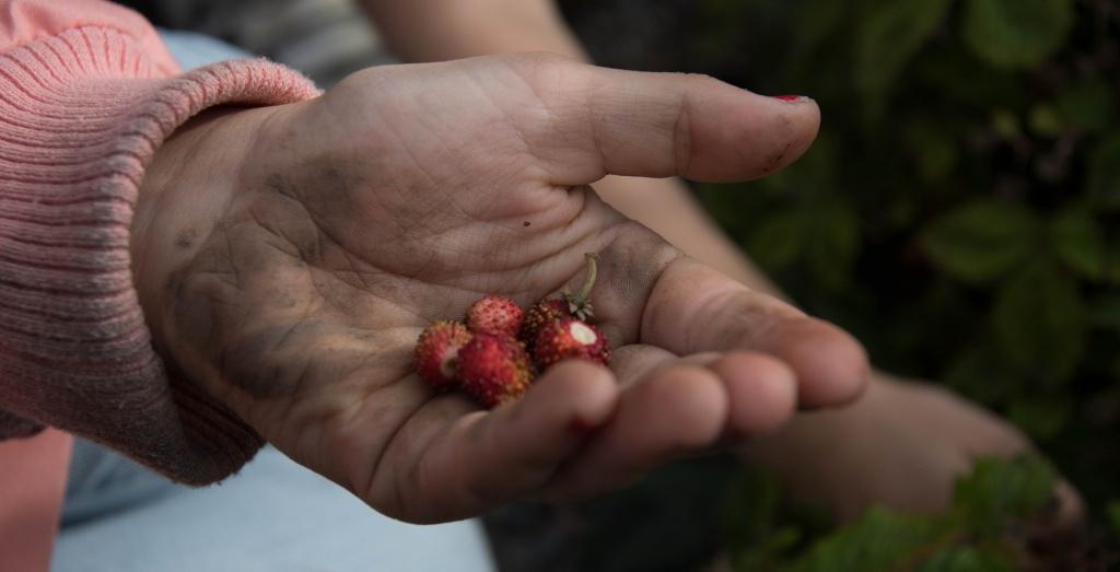 Barn med smultron i handen