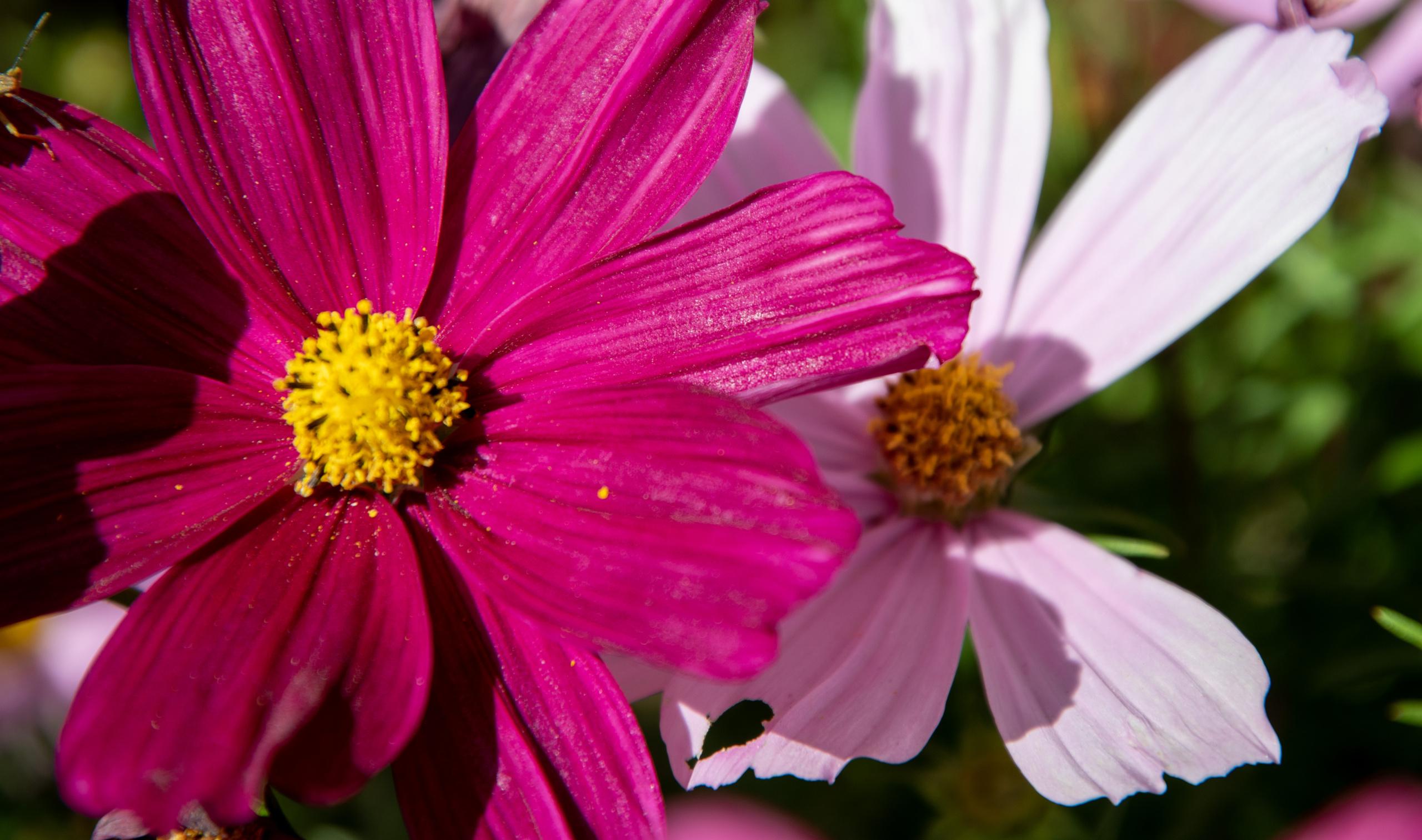 Sommarbild på blommor
